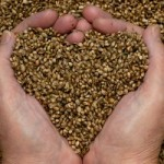 Why You Should Eat Raw Hemp Seeds Every Day, and 30 Recipes to Help You Do It!