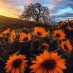 E93: Autumn VIBES- Samhain, Harvest & Halloween Rituals Revisited w. Judika Illes